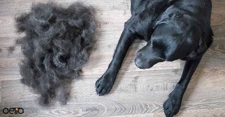 ریزش موی سگ به دلیل بیماری