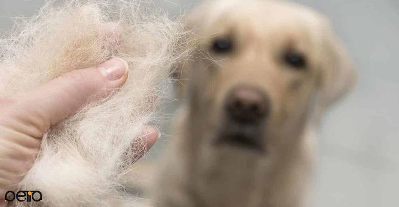 تاثیر استرس بر ریزش مو در سگ ها