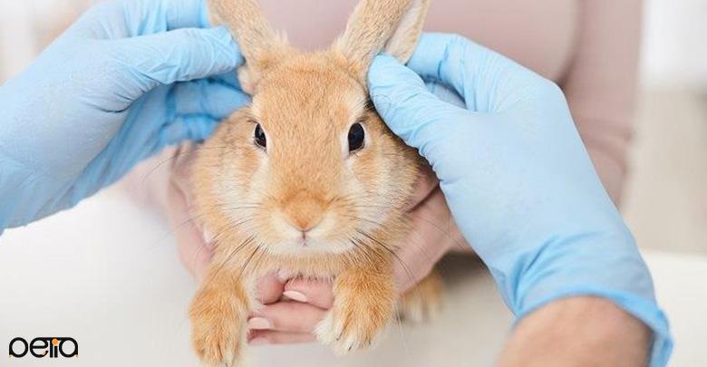 جلوگیری از ابتدا شدن خرگوش به بیماری های واگیردار