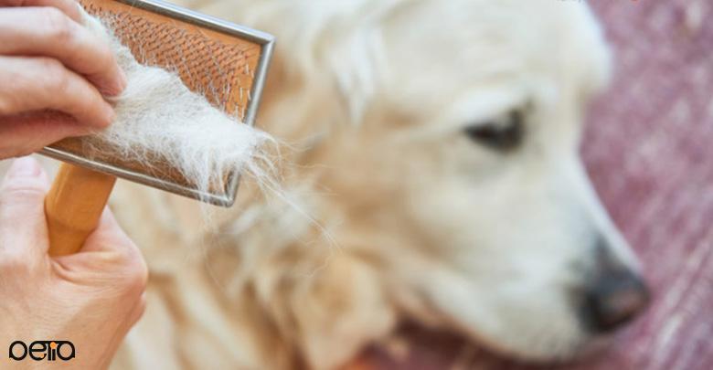 ریزش موی سگ