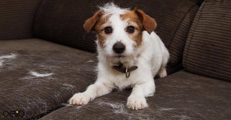 ریزش مو در سگ ها