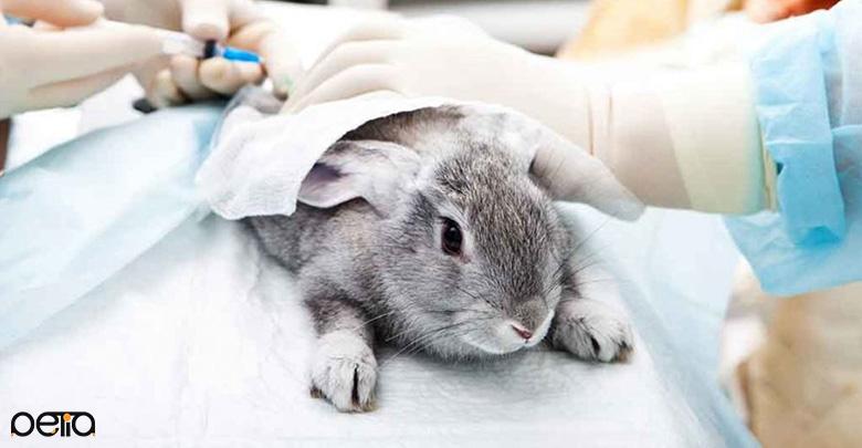 پاستورلوز بیماری قابل انتقال خرگوش به انسان