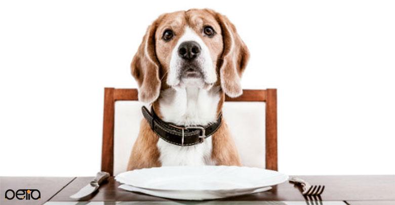 تغذیه سگ بیگل