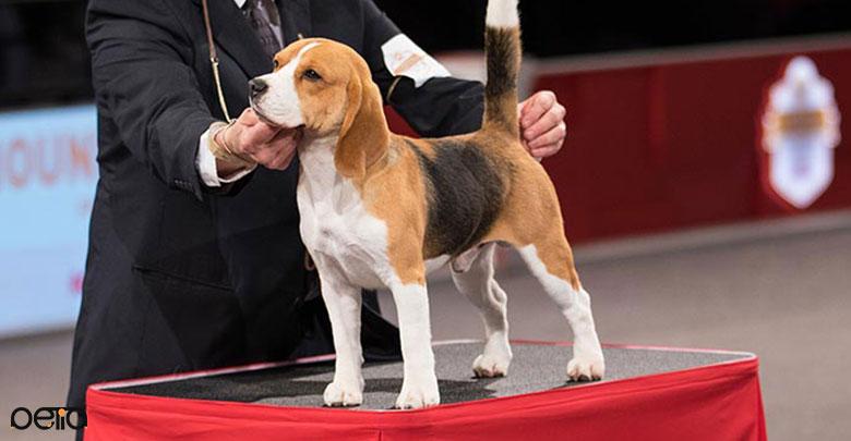 ظاهر سگ Begueule