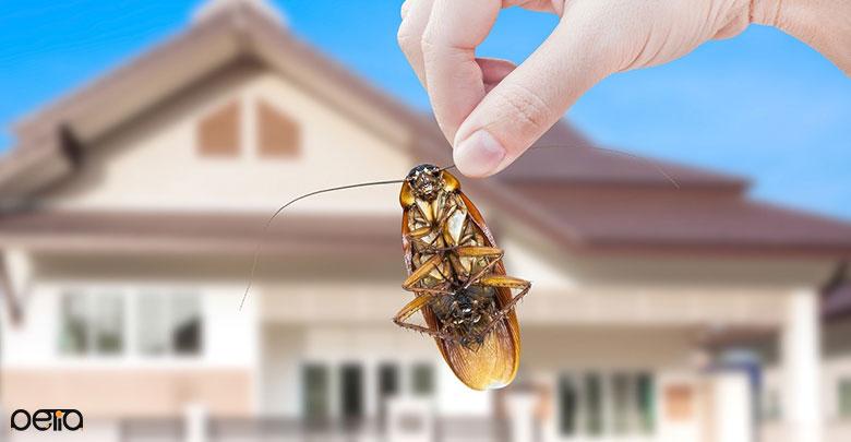 جلوگیری از تولید مثل حشرات