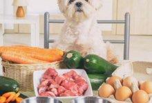 غذاهای مشترک انسان و سگ