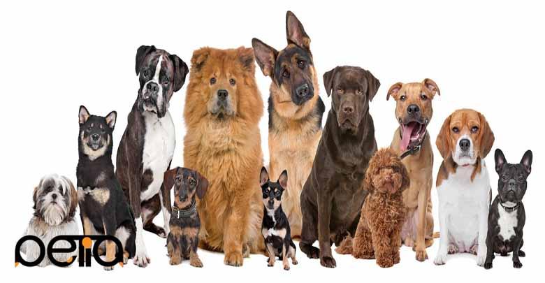انتخاب اسم برای سگ ها